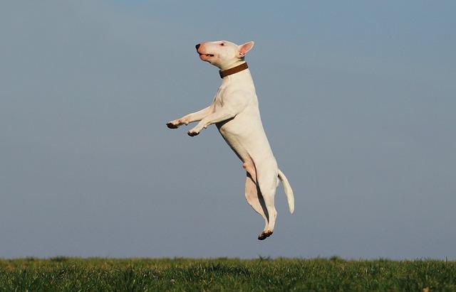 הילס לכלבים באנימל שופ – לקנות במקום הנכון את המוצר הנכון
