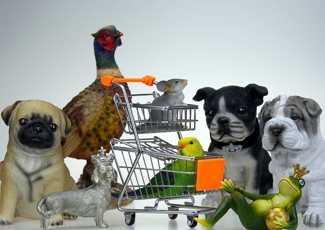 חנות חיות תלפיות – לקנות במקום הנכון