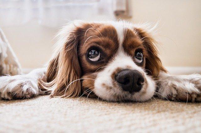 וטרינר לכלב
